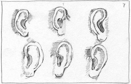 comment dessiner une oreille de face