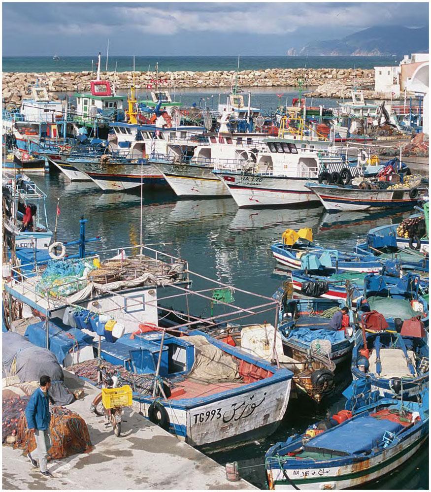 Produit Contre L Humidité Tunisie récit 16. les pêches ancestrales dans le nord tunisien