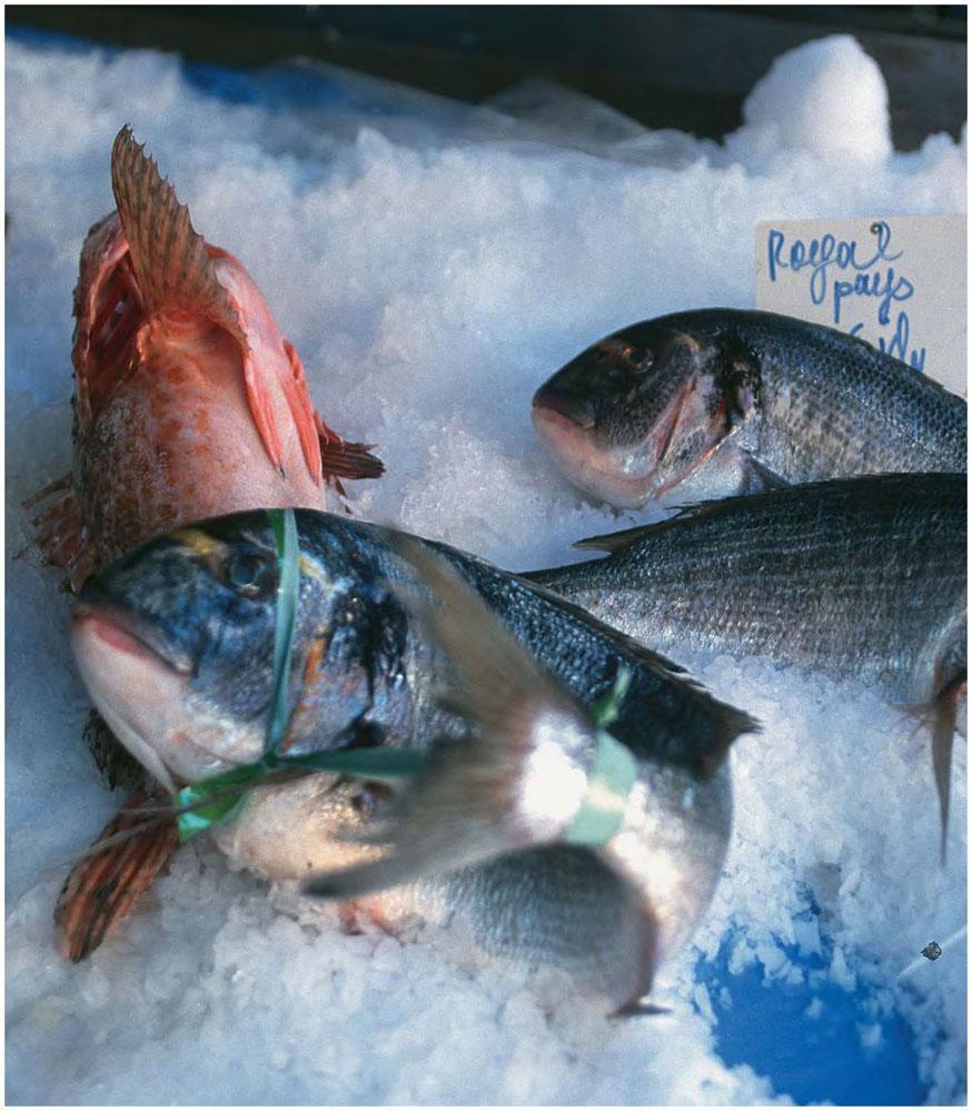 Trop de poissons dans la mer datant